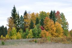 Golden autumn. Deaf corners of Russia. royalty free stock photo