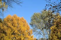 Golden autumn. Royalty Free Stock Photo