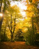 The golden autumn stock image