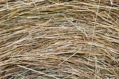 Golden autumn fall hay straw texture Royalty Free Stock Photos