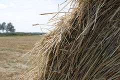Golden autumn fall hay straw texture Stock Images
