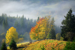 Golden Autumn. Foggy morning in mountains Stock Image