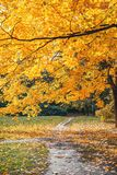 Golden autumn. Footpath in a park or forest under a maple. Autumn Forest Park. Golden autumn. Footpath in a park or forest under a maple. Autumn Forest, Park stock photo