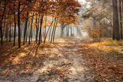 Golden autumn in the forest stock photos