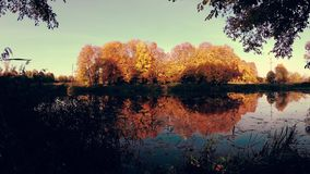 Golden autumn on the forest lake in the evening. stock video footage