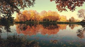 Golden autumn on the forest lake in the evening. stock footage