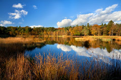 Golden autumn forest by lake Stock Image