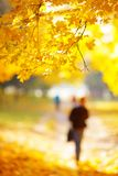 Golden autumn in the forest Stock Photo