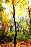Golden autumn in the forest Stock Image