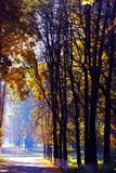 Golden autumn in the forest Royalty Free Stock Photos