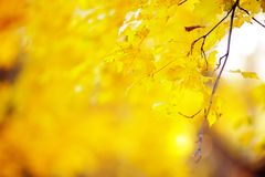 Golden autumn in the forest Royalty Free Stock Images