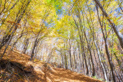 Golden Autumn Forest Royalty Free Stock Photography