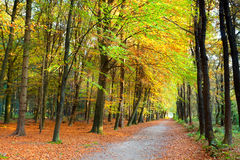 Golden autumn in forest Stock Images