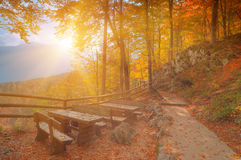 Golden autumn forest in sun rays Stock Photos