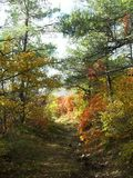 Golden autumn.  Forest trail. A pleasant warm autumn day, a landscape, a walk in the forest Stock Photo