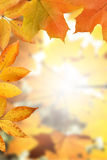 Golden Autumn Frame Royalty Free Stock Image