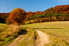 Golden Autumn in German countryside Stock Photos