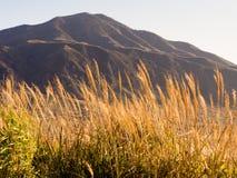 Golden autumn grass at Kusasenri Plateau inside Aso volcanic caldera. Aso-Kuju National Park, Kumamoto prefecture royalty free stock images