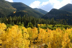 Golden Autumn and Green Mountains stock image