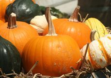 Golden Autumn Harvest - Pumpkins Royalty Free Stock Image