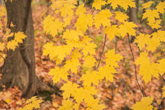 Golden autumn. In Humber River park, Toronto, Ontario, Canada Stock Images