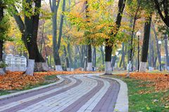 Free Golden Autumn In A City Park On A Foggy Morning Stock Photos - 161891553