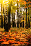 Golden autumn, Indian summer Stock Images