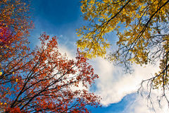Golden autumn landscape. Golden autumn landscape with deciduous trees against the sky in Sunny weather royalty free stock photography