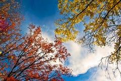 Golden autumn landscape. Royalty Free Stock Photography