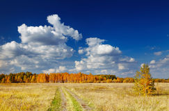 Golden autumn Royalty Free Stock Images