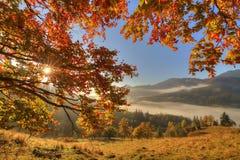 Golden autumn landscape Stock Photos