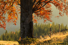 Golden autumn landscape Royalty Free Stock Image
