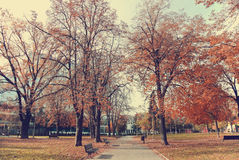 Golden autumn landscape in a park; trees with golden brown leaves Royalty Free Stock Photos