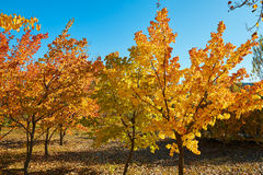 The golden autumn landscape Stock Image