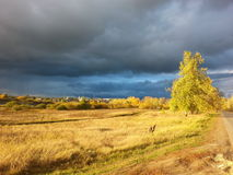 Golden autumn. And leaden sky Royalty Free Stock Photography