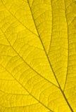 Golden autumn leaf Royalty Free Stock Image