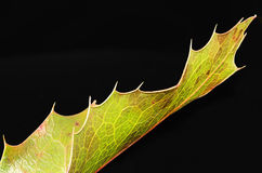 Golden autumn leaf. Royalty Free Stock Photo