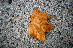 Golden Autumn leaf on concrete. Golden Autumn leaf resting on concrete Royalty Free Stock Photography