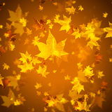 Golden autumn leaves Stock Photo