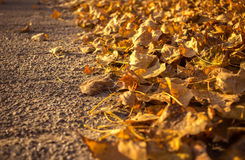 Golden autumn leaves along the road. space for text Stock Image