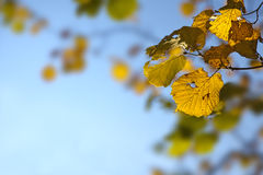 Golden autumn leaves background Stock Photo