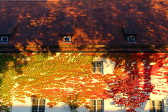 Golden Autumn Leaves Cover House Facade Royalty Free Stock Photo