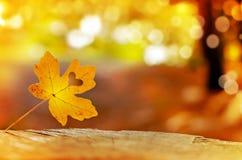Golden autumn leaves Stock Image