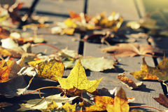 Golden autumn leaves Royalty Free Stock Photos