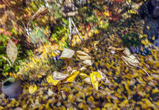 Golden autumn leaves  flying Royalty Free Stock Images