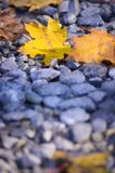 Golden autumn leaves on the ground. Background Stock Photos