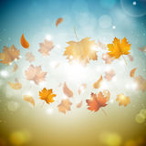 Golden Autumn Leaves. Sunny golden autumn background with leaves and blurry lights Royalty Free Stock Photo