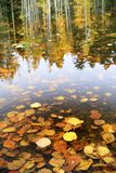 Golden autumn leaves and tree reflections Stock Photos