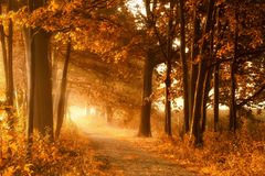 Golden autumn lightbeams on a footpath Stock Photography