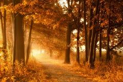 Golden autumn lightbeams on a footpath. Golden sunbeams of autumn on a misty footpath with deciduous trees Stock Photography